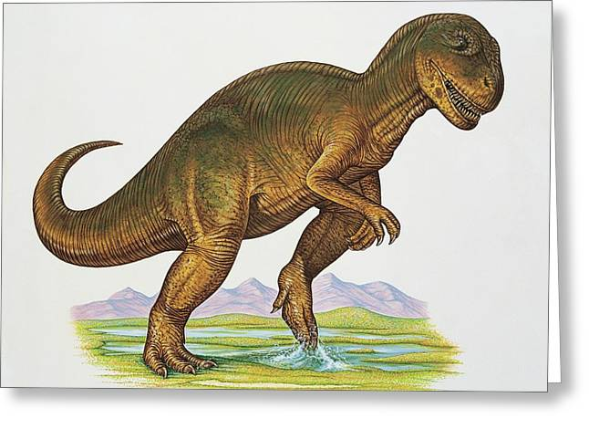 Allosaurus Dinosaur Greeting Card by Deagostini/uig/science Photo Library