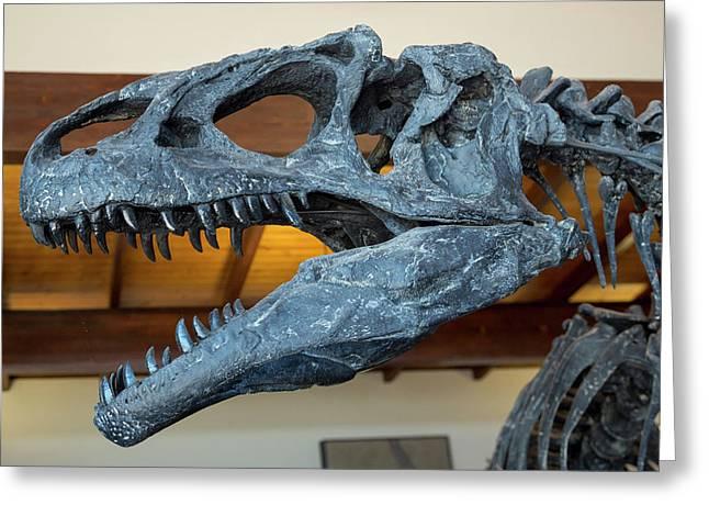 Allosaurus Dinosaur Fossil Display Greeting Card by Jim West