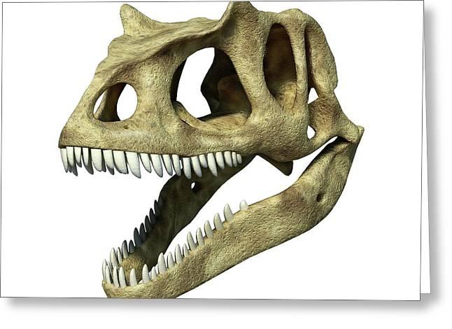 Allosaurus Dinosaur Skull Greeting Card by Leonello Calvetti/science Photo Library