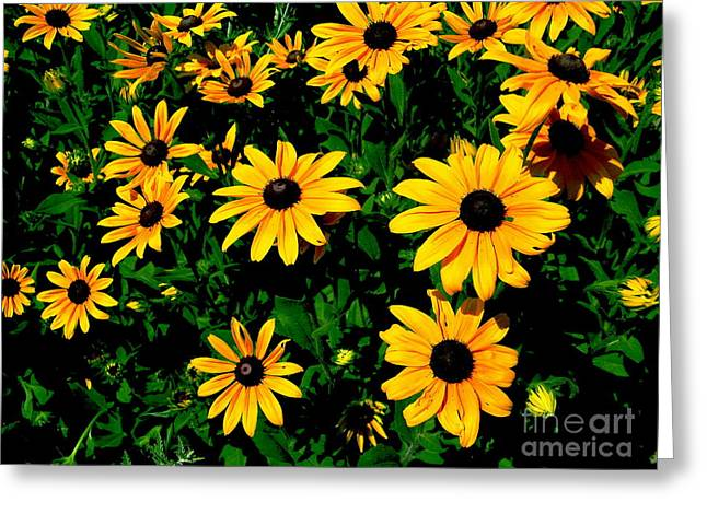Sunflower Allure Greeting Card
