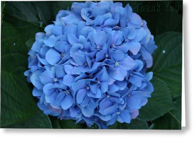 Allyn's Blue Hydranga And A Reminder To Utter The Words Thank You. Greeting Card
