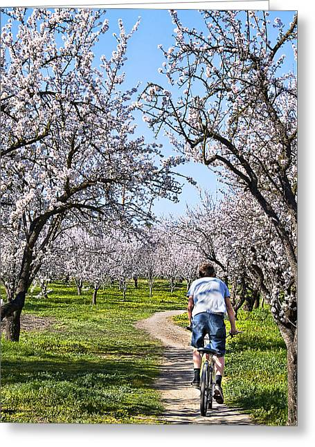 Almond Orchards In Full Bloom Greeting Card