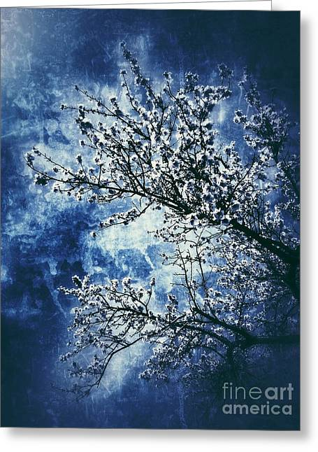 Almond Tree #2 Greeting Card by Angela Bruno