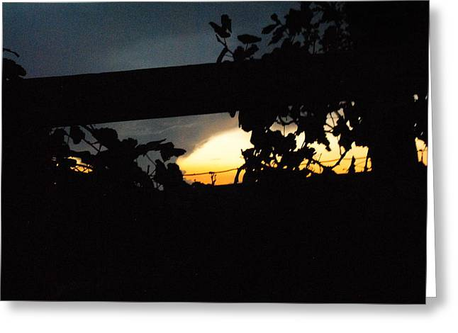 Vineyard At Twilight Greeting Card