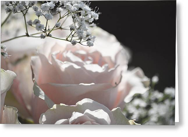 Almost White Roses Greeting Card by Deprise Brescia