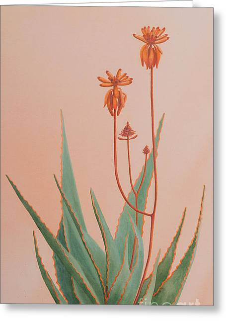 Aloe Family Greeting Card