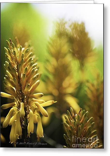 Aloe 'kujo' Plant Greeting Card by Richard J Thompson
