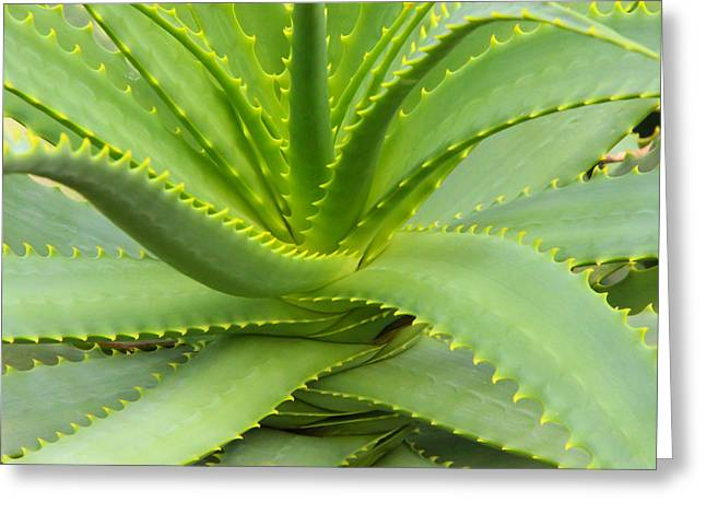 Aloe Vera Defined Greeting Card by Rachel Cohen