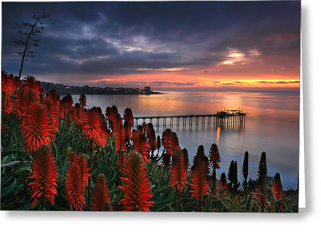 Aloes Last Light Greeting Card