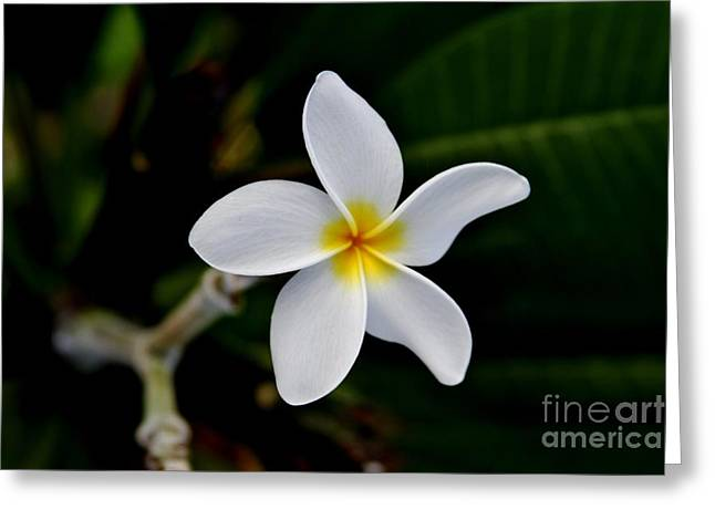 Aloha Greeting Card by Butch Phillips