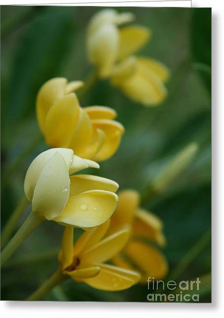 Aloha He Pua Lahaole Kula Gardenia Grandiflora Greeting Card by Sharon Mau