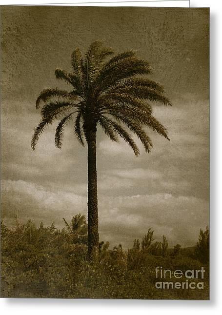 Aloha Palm - No.2047 Greeting Card