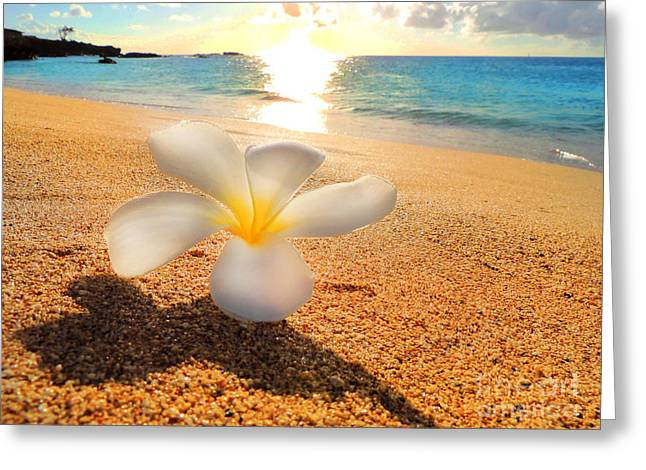 Aloha Paradise Greeting Card