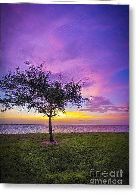 Alone At Sunset Greeting Card