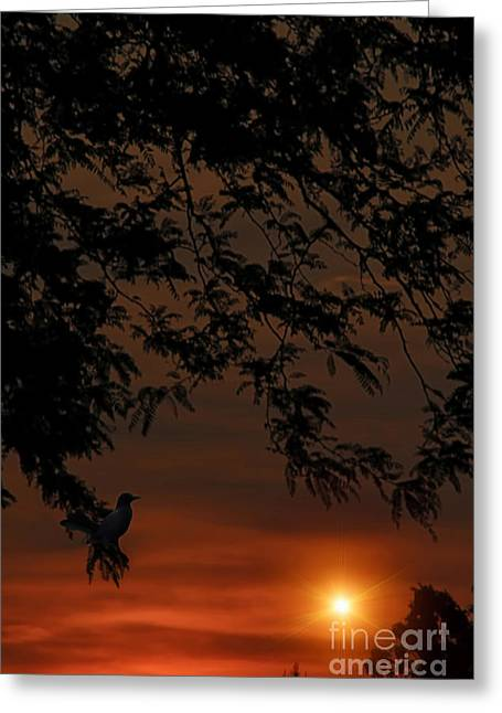 Alone At The End Of The Day Greeting Card by Tom York Images