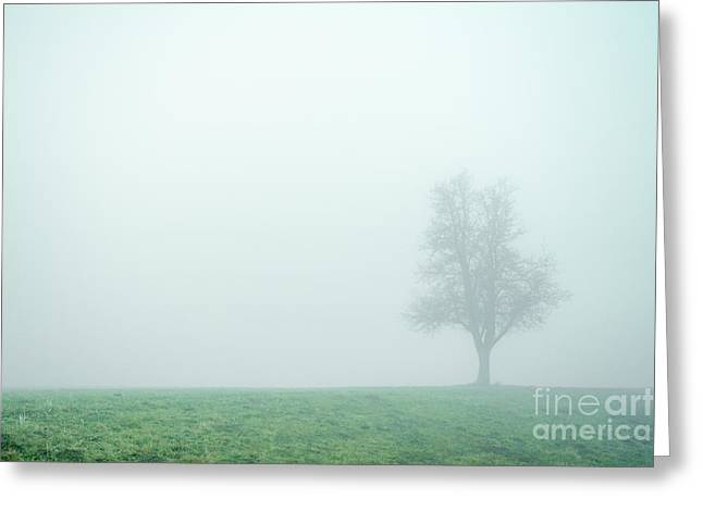 Alone In The Fog - Green Greeting Card by Hannes Cmarits