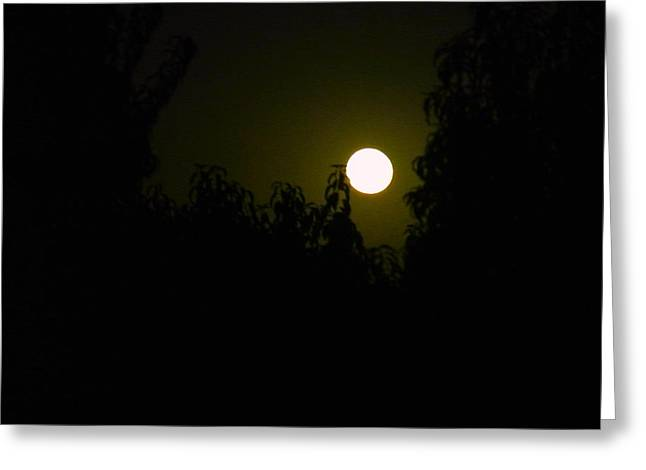 Greeting Card featuring the photograph Alone In The Night by Tamara Bettencourt
