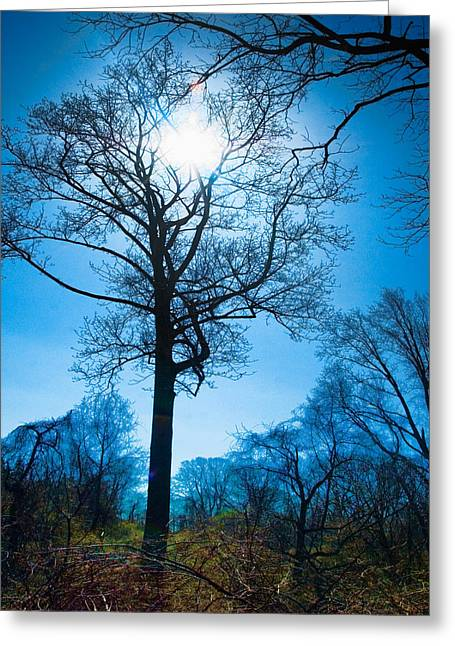 Alone In The Woods Greeting Card by Robert Culver