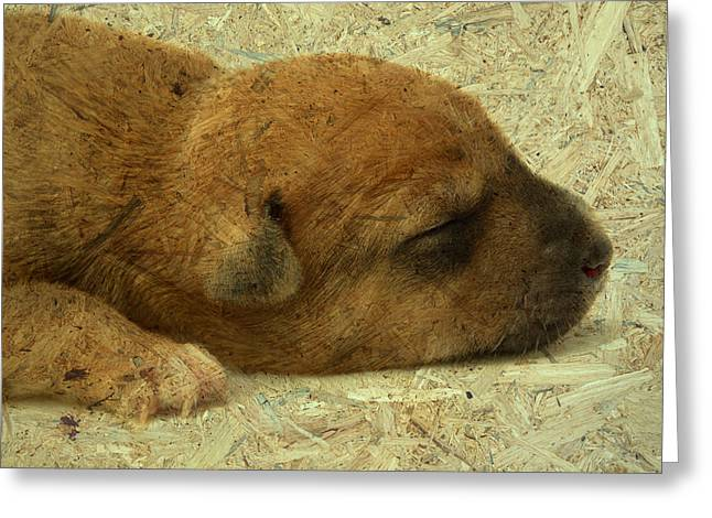 Alone Little Dog Is Sleep Greeting Card by Wissanu Phiphithaphong