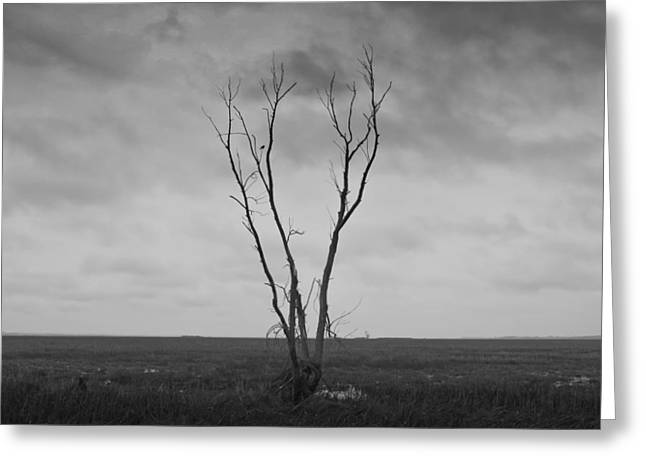 Greeting Card featuring the photograph Alone  by Ricky L Jones