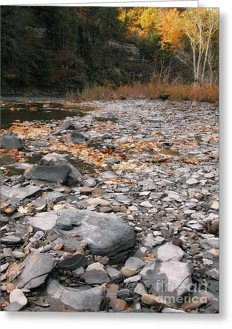 Along Eighteen Mile Creek Greeting Card