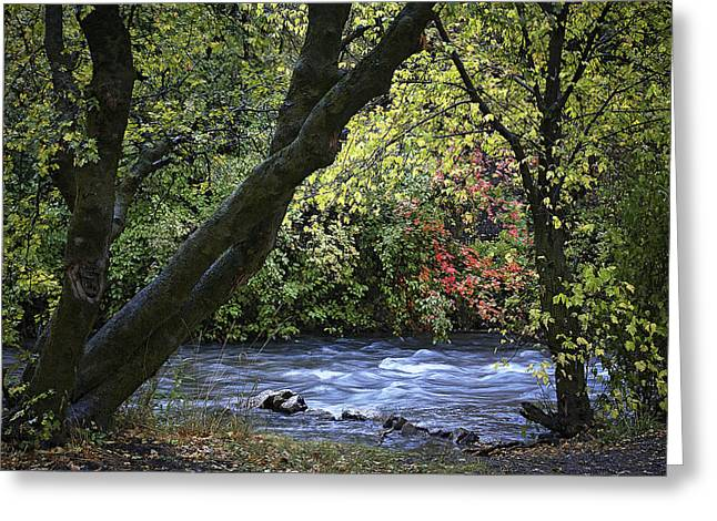 Along Swift Waters Greeting Card by Priscilla Burgers