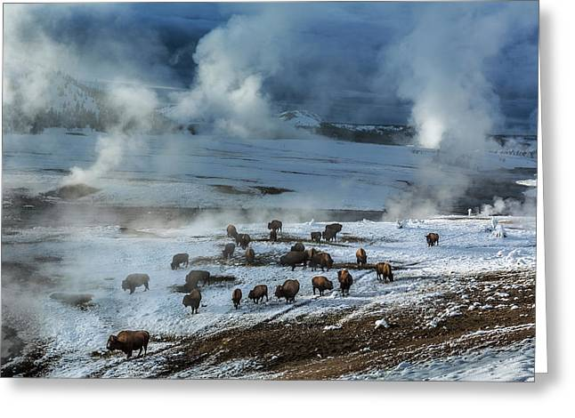 Along The Firehole River In The Upper Greeting Card by Michael Nichols