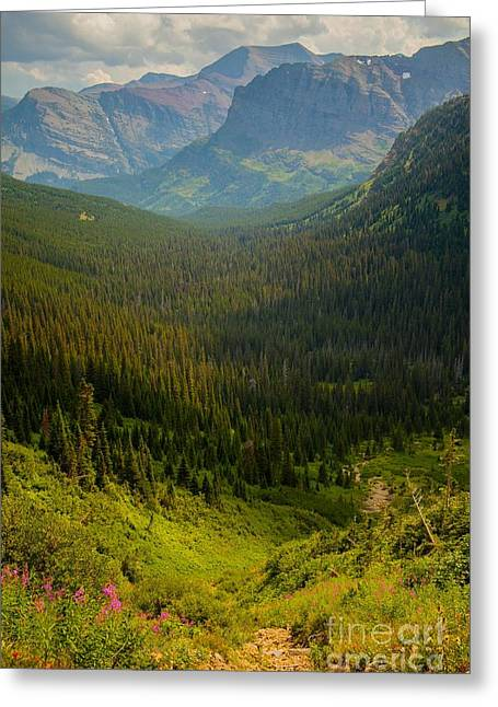 Along The Path To Iceburg Lake 19 Greeting Card by Natural Focal Point Photography
