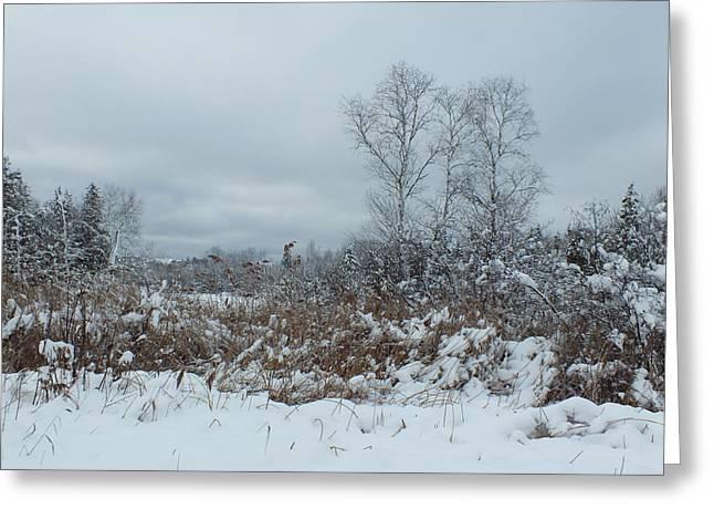 Along The Trail Greeting Card by Gene Cyr