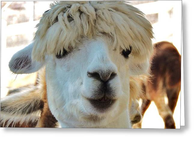 Alpaca Hair Do Greeting Card