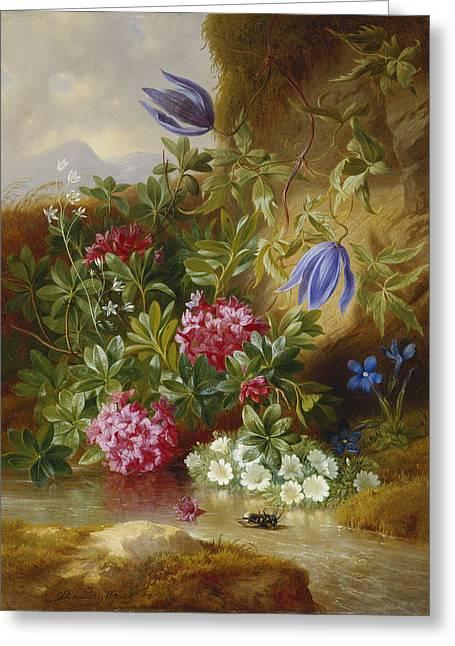 Alpenblum Greeting Card by Josef Schuster