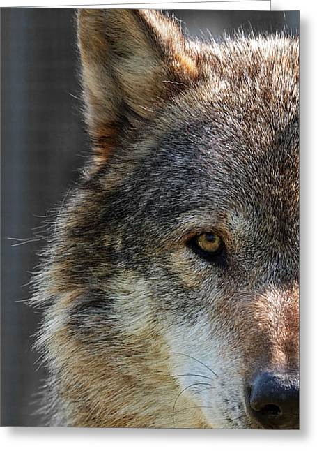 Alpha Male Wolf - Don't Mess With Me Greeting Card by Gill Billington