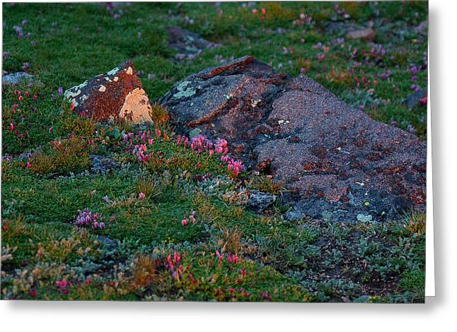 Greeting Card featuring the photograph Alpine Blush by Jim Garrison