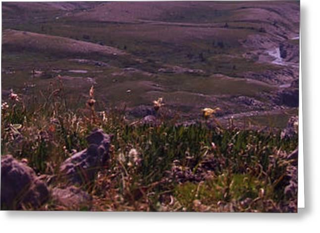 Alpine Floral Meadow Greeting Card