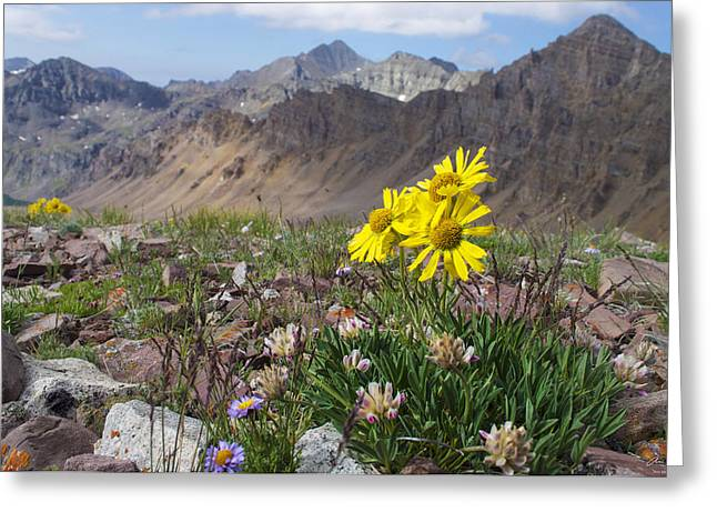 Alpine Flowers Greeting Card by Aaron Spong