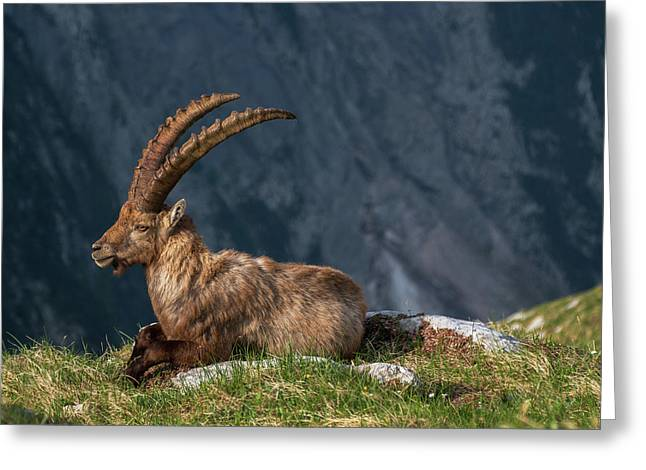 Alpine Ibex Greeting Card by Ales Krivec