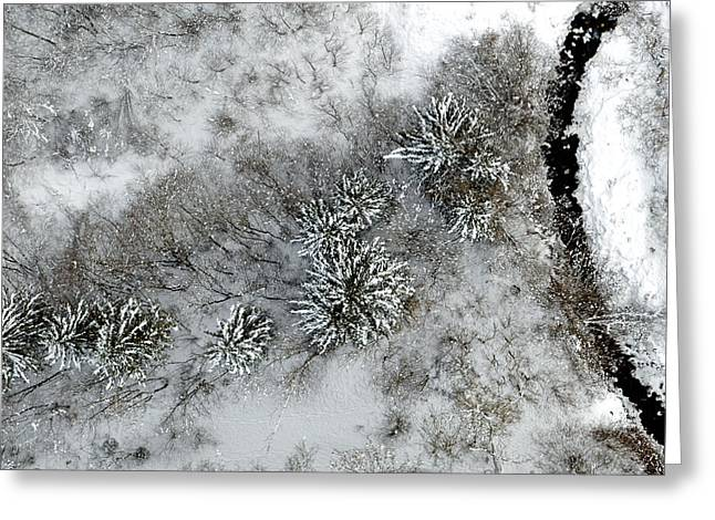Alpine Snow Trees Greeting Card by Stephen Richards