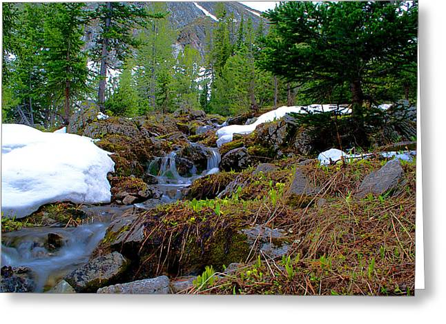 Greeting Card featuring the photograph Alpine Spring  by Kevin Bone