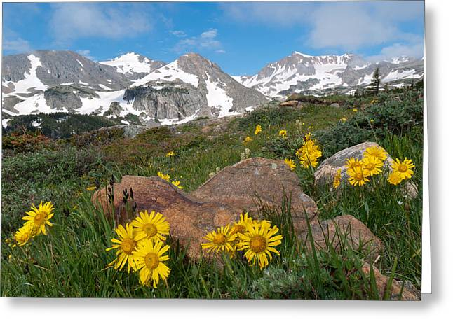 Alpine Sunflower Mountain Landscape Greeting Card
