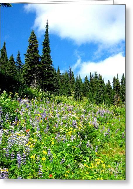 Alpine Walk Greeting Card by Kathy Bassett