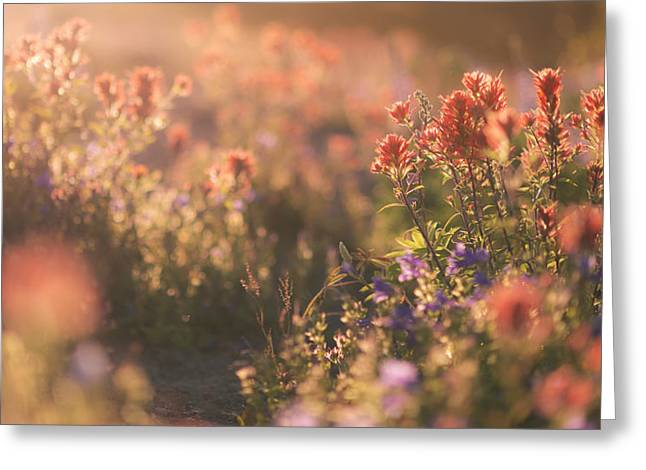 Alpine Wildflowers At Mt. St. Helens Greeting Card