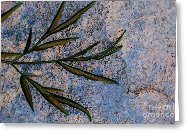 Altered State Greeting Card by Judy Wolinsky