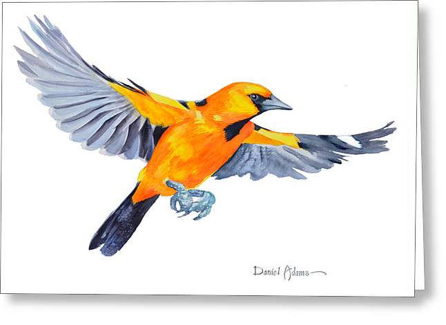 Da200 Altimira Oriole By Daniel Adams  Greeting Card