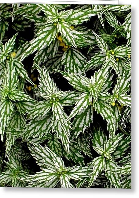 'aluminum Plant Close-up' Greeting Card