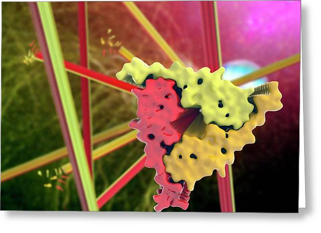 Alzheimer's Beta-amyloid Fibrils Greeting Card by Ramon Andrade 3dciencia
