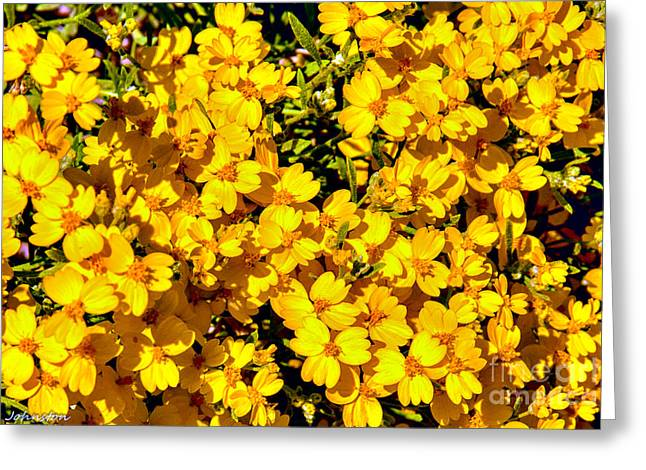 Am I Dreaming About Buttercups Greeting Card by Bob and Nadine Johnston
