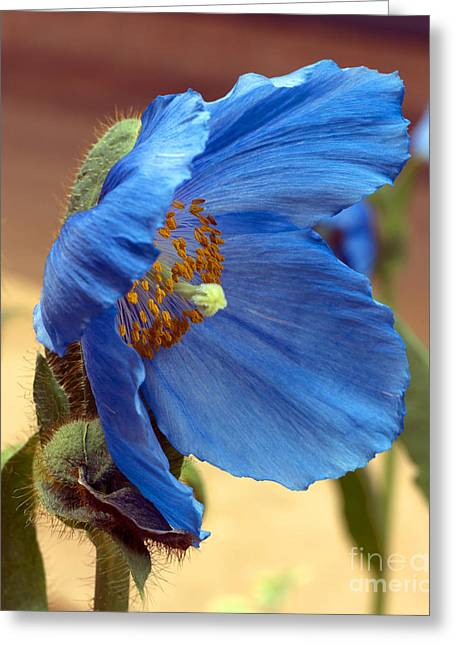 Am I Too Blue For You Greeting Card by Elizabeth Chevalier