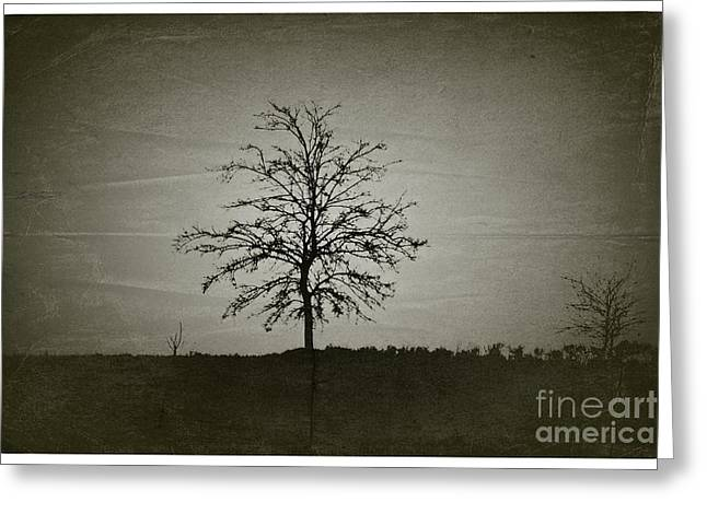 Am Trees - No.226 Greeting Card by Joe Finney
