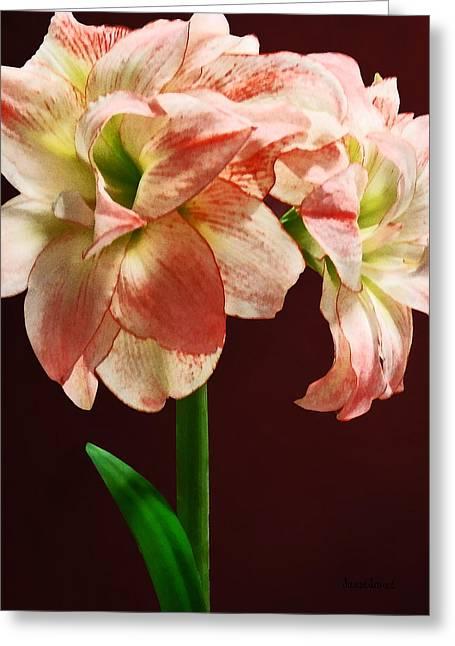 Amaryllis Aphrodite Greeting Card by Susan Savad