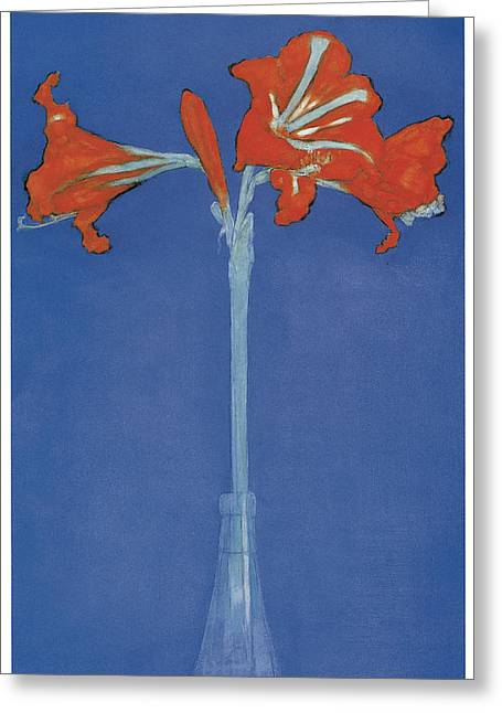 Amaryllis In A Flask In Front Of A Blue Background Greeting Card